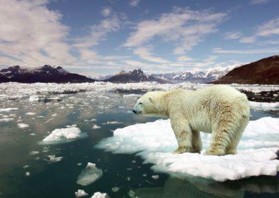 Melting Sea Ice -Odyssey